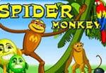 קוף עכביש